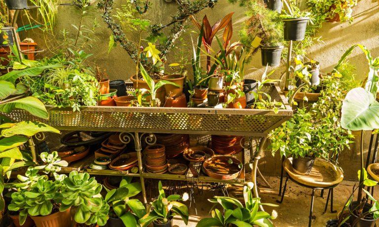 Love your plants!